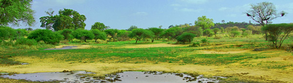 out-of-africa-1374408-1279x850